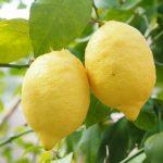 citroen is lekker fris bij zalm
