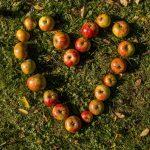 ook apples leveren vezels
