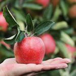appels vaak goedkoop en gezond